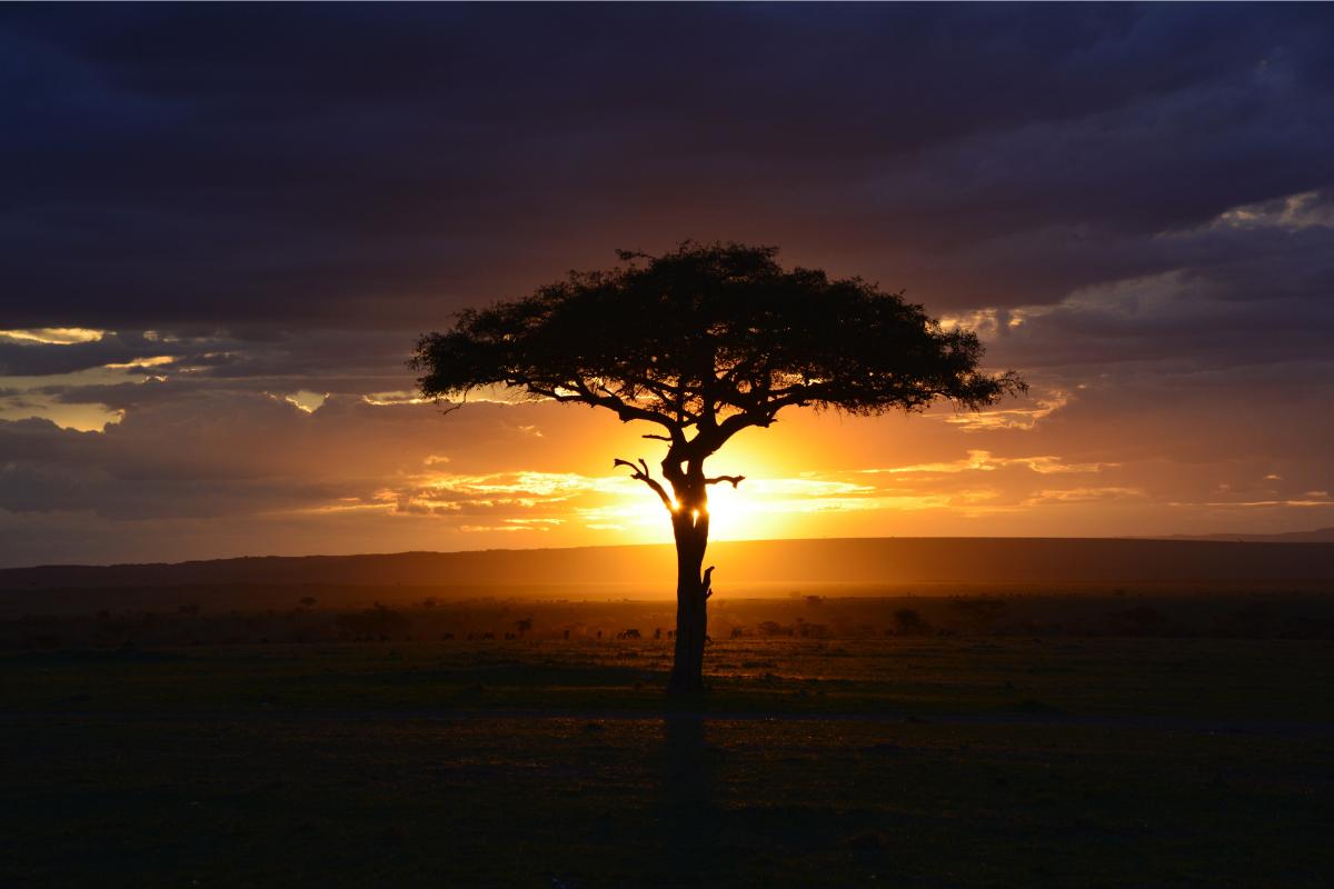 Tree, sunset, Africa Boy