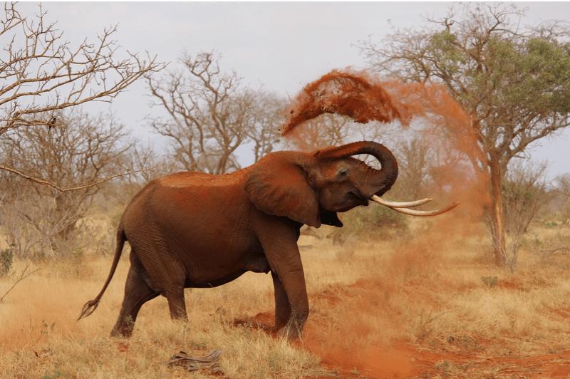 Elephant with Sand